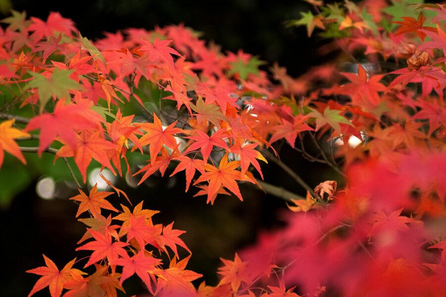 autumn-leaves_00014.jpg